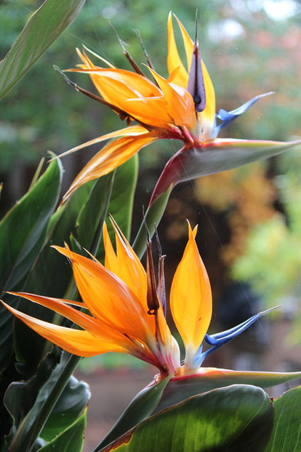 7 Gainesville Landscape Plants That Snobs Hate But You Ll
