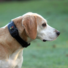 Dog Tracking Collar
