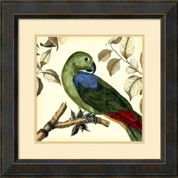 Amanti Art - Martinet 'Tropical Parrot III' Framed Art Print 23 x 23-inch - Who's a pretty bird? This vintage styled tropical friend adds a spark of lively color and feathered charm to your wall; making a great accent piece for any room in your home or office.