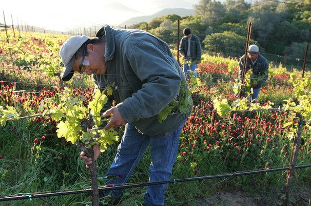 Silverado Farming