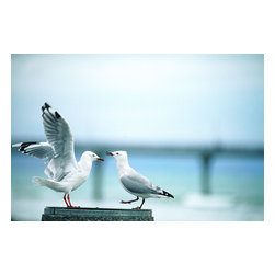 Custom Photo Factory - Two Sea-Gulls Canvas Wall Art - Two Sea-Gulls  Size: 20 Inches x 30 Inches . Ready to Hang on 1.5 Inch Thick Wooden Frame. 30 Day Money Back Guarantee. Made in America-Los Angeles, CA. High Quality, Archival Museum Grade Canvas. Will last 150 Plus Years Without Fading. High quality canvas art print using archival inks and museum grade canvas. Archival quality canvas print will last over 150 years without fading. Canvas reproduction comes in different sizes. Gallery-wrapped style: the entire print is wrapped around 1.5 inch thick wooden frame. We use the highest quality pine wood available. By purchasing this canvas art photo, you agree it's for personal use only and it's not for republication, re-transmission, reproduction or other use.