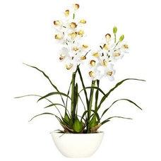 Modern Plants by Hayneedle