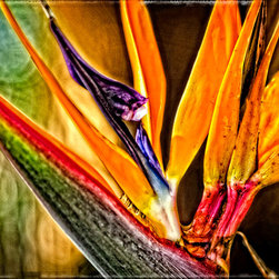Floral and Tree Art - Vibrant Flowers and Trees - Bird Talk - Bird Of Paradise By Sharon Cummings. Buy Fine Art Prints Online.
