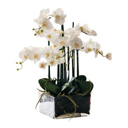Winward - Phalaenopsis In Square Glass Flower Arrangement - Orchids are the epitome of chic in any space, but they're notoriously tough to care for. Forget the fertilizer and invest in an elegant permanent version for your home or office. You'll enjoy its blossoms all year long, and you'll have one less plant to water.