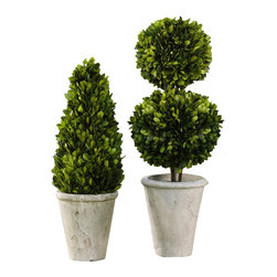 Zodax - Zodax Preserved Boxwood Topiary (Set of 2) - Zodax - Flower Pots / Planters - CH1826S - Preserved Boxwood Square Shaped Topiary