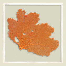 Karen Robertson Square Sea Fan, Sunset Orange - This is a beautiful gift from nature in a special hue. We'd use it in a beach house bathroom.