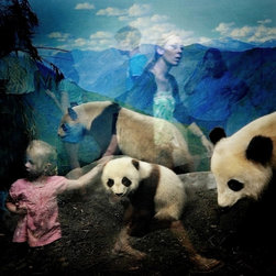 Pandas - Limited Edition Photography - This is part of a photographic series which captures ghost-like reflections of museum visitors viewing wildlife dioramas. It was created by award-winning photographer Traer Scott whose work has been published in National Geographic and Vogue.