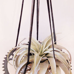 Air Plant Hangers - One of a kind air plant hanger made completely of recycled bicycle parts. Large rare airplant included.