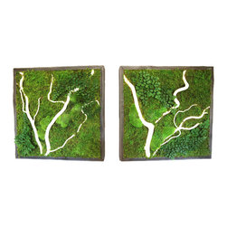 "Artisan Moss - Plant Painting (care-free preserved green-wall art) - Our handcrafted ""plant paintings"" are zero maintenance green walls that are remarkably light-weight, utilizing all real preserved plants."