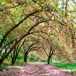 Murals Your Way - Central Park Spring Cherry Blossoms Wall Art - Photographed by Andrew  Prokos, Central Park Spring Cherry Blossoms wall mural from Murals Your Way will add a distinctive touch to any room