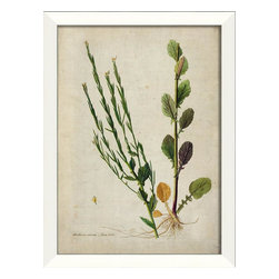 The Artwork Factory - Barbarea Stricta Botanical Framed Artwork - Ready-to-Hang, 100% Made in the USA, museum quality framed artwork