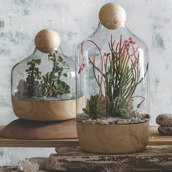 Roost Copenhagen Terrarium - If you want your terrarium to really take center stage, one of these vessels from Roost is the perfect choice. It's definitely more spendy than others, but you can't deny that it is gorgeous.