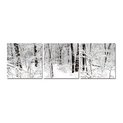Baxton Studio - Baxton Studio Winter Woods Mounted Photography Print Triptych - The quiet peace of a world in hibernation is at its height just after a snowfall. This triptych presentation of a serene snow-filled forest photograph is printed with bright, crisp inks on durable waterproof vinyl canvas before being mounted on three separate MDF wood frames. Printed and manufactured in China, this contemporary photo set is fully assembled and ready to hang, though mounting hardware is not included. To clean, we recommend dry dusting.