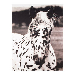Kathy Kuo Home - Hyden Rustic Lodge Modern Spotted Horse Photo Wall Art - Unframed - Seeing spots. A must-have addition to your art collection, this playful portrait will add instant impact to your walls with its bold, contrasting subject matter. Perfect for anyone, but especially moving for horse lovers.