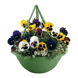 Bloem - Bloem 17in Milano Hanging Basket Living Green MBHB151742, 12 pack - Plastic planters offer affordable beauty without heavy weight or risk of breakage.