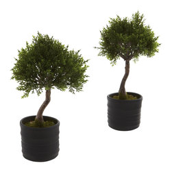 """Nearly Natural - Nearly Natural Cedar Bonsai with Planter (Set of 2) - Is there anything """"cuter"""" than a little bonsai tree? Ok, maybe a kitten gives it a run for its money, but kittens grow up and leave the yarn behind, while the bonsai stays cute forever. And this little faux cedar bonsai is the perfect representation of that - forever captured in perfect Bonsai size and shape, this little beauty will adorn your desk, counter, or anywhere else for years. Oh, what the heck - let's make this a set of two and really overload on cuteness."""