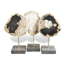 Interlude - Petrified Wood Trio - Science and art collide in this set of petrified wood specimens on marble bases. These examples of fossilized wood not only provide displays of organic structure, but ageless beauty. Center them on the mantle as a focal point for your living room.