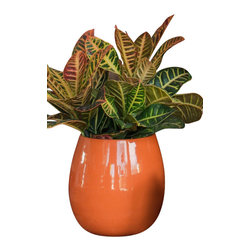 Spun Steel Planter, Small Taper - Lightweight and supremely colorful, these steel planters are a perfect cachepot for a houseplant or foundation for a succulent arrangement. Clear bright orange.