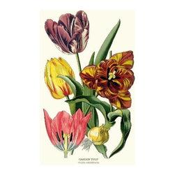 Garden Tulip Flower Botanical Print - 8x10 Print - Vintage style botanical flower art print from turn of the 19th century illustrations.
