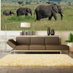Modern Wallpaper - Bull African Elephant family photo wall mural in a contemporary living room.