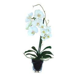 Jane Seymour Botanicals - Phalaenopsis Orchid in Glass Pot - Become the envy of even the most experienced gardener. This maintenance-free, white Phalaenopsis orchid will stay in bloom for years with no effort on your part. You can place the charming glass pot anywhere in your home — no sunlight required.