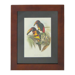 Pair of Bird Prints - Pair of framed prints featuring tropical birds drawing in colored pencil and watercolor.  They are framed in a chestnut-colored wood and matted in black.