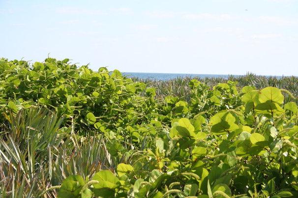 Great Design Plant: Sea Grape
