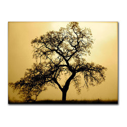 Trademark Fine Art - Colleen Proppe 'Pacific Oak' Gallery-wrapped Canvas Art - Give your walls a stunning focal point with this beautiful gallery-wrapped canvas art from Colleen Proppe. Featuring a shadowed oak tree on a warm,light-filled background,this print is ready to hang and is sure to complement any home or office decor.