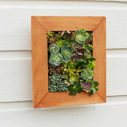 "Viva Terra - Framed Succulent Wall Art - To cultivate this vertical wall garden, allyou need is a love for nature and a fewminutes of your time. An assortmentof Sedum varieties - including adolphy,nasbaum and Vera Higgins - are housedin a redwood frame and continue togrow and thrive with minimal care.Hangers in back allow you to rotatethe frame each month so the succulentsgrow out, rather than up or down.Water lightly and enjoy years of ever-growing garden art. 15""L x 13.5""W x 3""D* 3-day delivery is included. Choose standard shipping at checkout and this item will be upgraded at  no extra charge. Please see special shipping info for details."