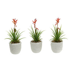 "D&W Silks - Artificial Blooming Succulent in Ceramic Planter, Set of 3 - It's amazing how much adding a plant can change the look of a room or decor, but it can be difficult if your space is not conducive to growing plants, or if you weren't exactly born with a ""green thumb."" Invite the beauty of nature into your home without all the upkeep with this maintenance-free, allergy-free arrangement of artificial blooming succulent in a ceramic planter. This is not a living plant."