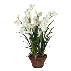 "Silver Nest - Potted Cymbidium Orchid- 44""h - Potted Cymbidium Orchid Plant"