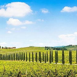 Magic Murals - Tuscany Italy Vineyard Panorama Wall Mural -- Self-Adhesive Wallpaper by MagicMu - Classic view of Cypress trees lining the dirt lane that winds its way up to through the vineyards and toward the Tuscan villa in this Italian panoramic.