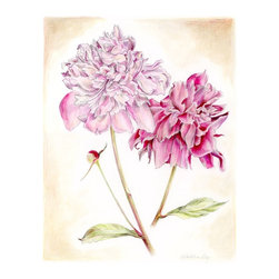 """Peonies, Floral Mixed Media Drawing, Original, Drawing - natural history botanical art, very detailed and delicately colored. inspired by vintage floral art, this is a mixed media drawing of two peonies. a skillfully rendered art piece for your home decor, this piece would be wonderful in a grouping! the paper size is 14"""" x 17"""", the image size is appx. 10.5"""" x 13.5"""". on 110 lb smooth crisp white paper made for detailed art. will be shipped unframed in rigid cardboard packaging. please note: colors may vary slightly due to photography and difference in monitors. the copyright watermark shown here is not a part of the original art or prints. purchase of original art does not transfer reproduction rights."""