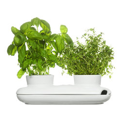 Herb Pot Duo - Nothing welcomes you to the dinner table like fresh herbs. Create a stylish kitchen or dining-room tabletop with this attractive herb container, which lets you keep your favorite herb duo within arm's reach.