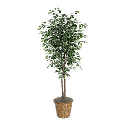 Vickerman - 6' Variegated Deluxe - 6' Variegated Ficus Deluxe on natural hardwood trunks. Potted in dark brown rattan basket with American made excelsior.