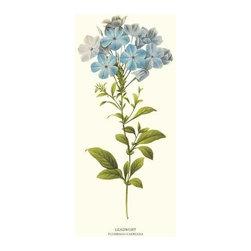Leadwort Flower Botanical Print - 8x10 Print - Vintage style botanical flower art print from turn of the 19th century illustrations.