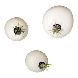 ceramicscapes - Set of Three Ceramic Wall Pods - This listing is for 3 hanging wall planters (plants not included) and is made to order. Please allow 3-4 weeks to make and send out for delivery.