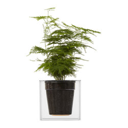 Single Cube Planter - Large - Bring your home to life with the Single Cube Tabletop Planter. The planter's clear design allows you to see the water, soil and roots of the plant exposed. This planter also features a water reservoir capable of holding up to 4 weeks of moisture.