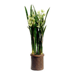 Silk Plants Direct - Silk Plants Direct Cymbidium Orchid Plant (Pack of 1) - Silk Plants Direct specializes in manufacturing, design and supply of the most life-like, premium quality artificial plants, trees, flowers, arrangements, topiaries and containers for home, office and commercial use. Our Cymbidium Orchid Plant includes the following: