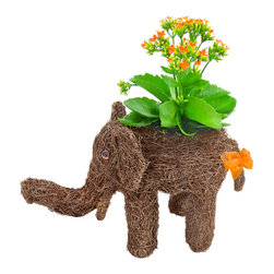 luludi living frames - Luludi Living Frames Elie Rattan - our rattan elephant planter comes with a lush display of pre-planted kalanchoes and moss with a decorative matching bow. made of rich chocolate woven rattan, this adorable living frame makes a wonderfully unique animal lover and housewarming gift.