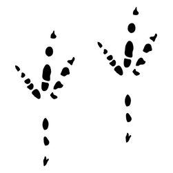 Stencil Ease - Crow Animal Tracks Stencil - Crow Animal Tracks Stencil - BASIC Stencils Collection