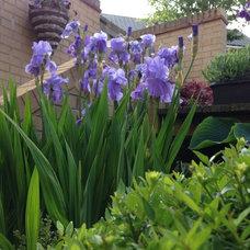 Chelsea in my garden