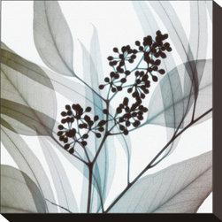 Artcom - Eucalyptus by Steven N. Meyers - Eucalyptus by Steven N. Meyers is a Stretched Canvas Print.