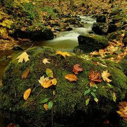 Magic Murals - Mountain Stream in Autumn Wallpaper Wall Mural - Self-Adhesive - Multiple Sizes - Mountain Stream in Autumn Wall Mural