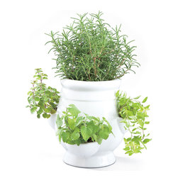 Windowsill Herb Garden Kit - This could do well in your kitchen with just a little bit of light, and the plants won't shrivel up from the few lingering cool days.