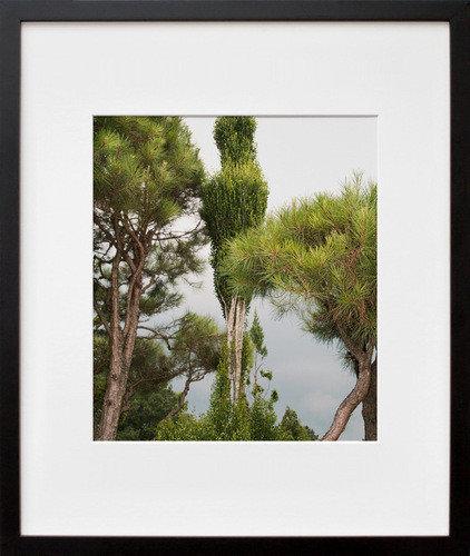 Contemporary Artwork Tree Study II By Beth Dow