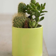 Contemporary Outdoor Pots And Planters by VivaTerra
