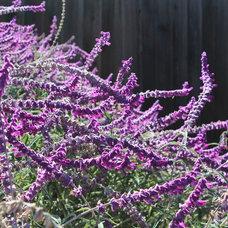 California Gardener's March Checklist