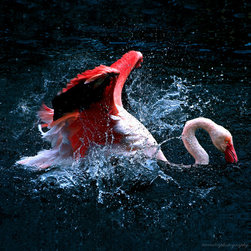 PrintedArt - flamingo bath - Print is made with archival pigment inks for best color saturation and contrast with a 75-year guarantee against fading or discoloring. Mounted on light-weight but rigid aluminum dibond board to create a float-on-the-wall piece of art. Also available face-mounted with acrylic.