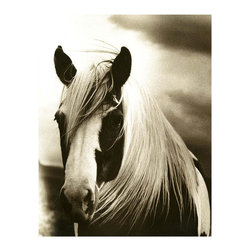 Mussed - Framed Print - A powerful image on a style-defining scale, Mussed depicts the calm gaze of a paint horse against a dramatic cloudy sky. The subtle sepia palette suits any room and emphasizes the contrast of values, particularly in the horse's mane, where the texture is so beautifully captured you'll want to stroke the coarse hair. A dark wood frame completes this exquisite photographic print.